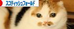 ばなーIMG_0451