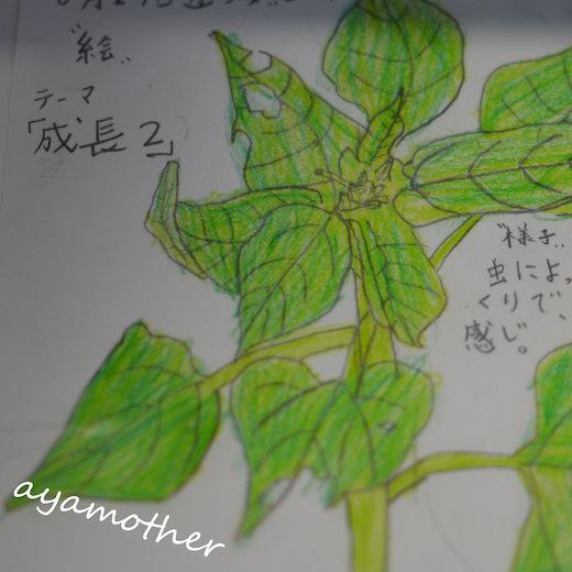 DSC_0556-1[1]