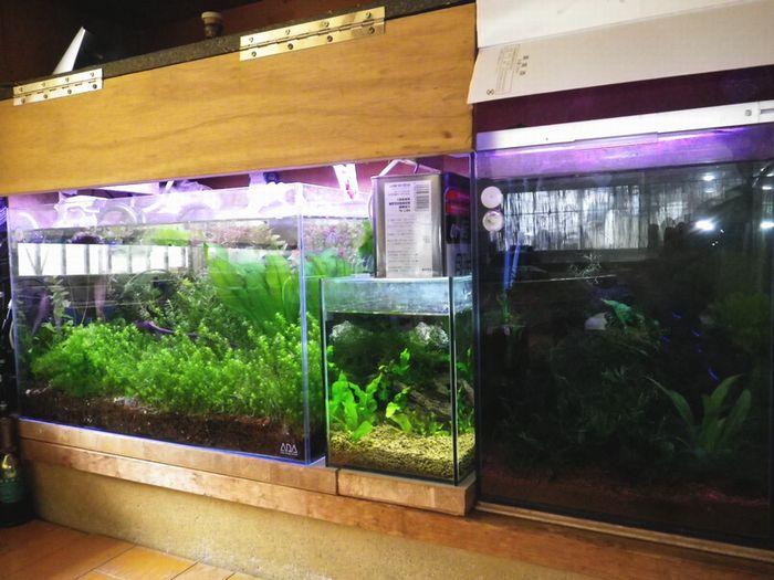 猫額山水族館