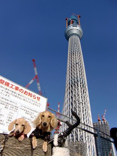 2010121806