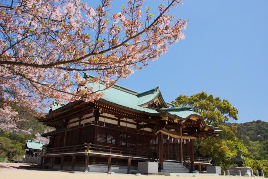 桜八幡ー3
