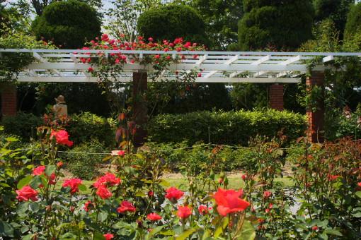 植物園ー4