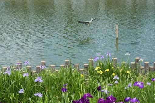 亀鶴公園ー1