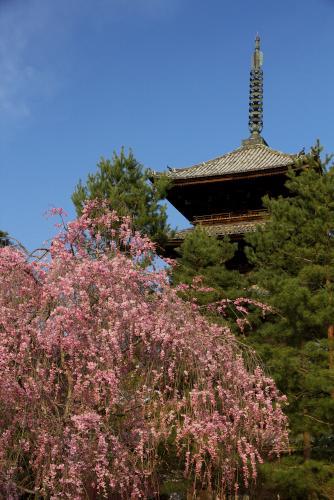 仁和寺ー1