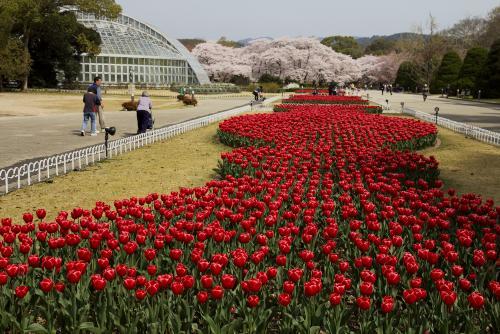植物園ー1
