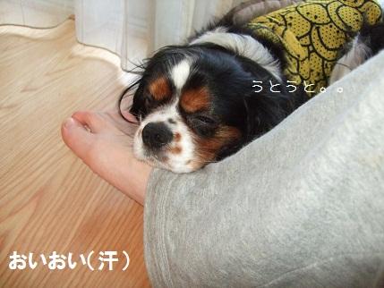 12_20100623230039.jpg