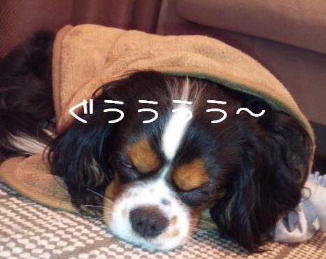 4_20100218232600.jpg