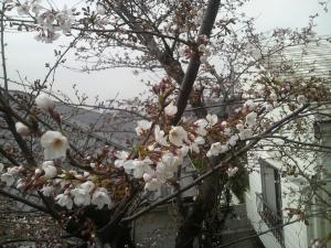 縺輔¥繧雲convert_20100331173133[1]
