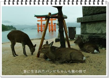 宮島 058