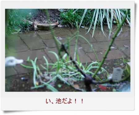 s-rain 005