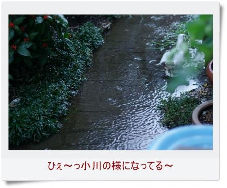 s-rain 003