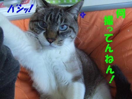 1_20091230180706.jpg