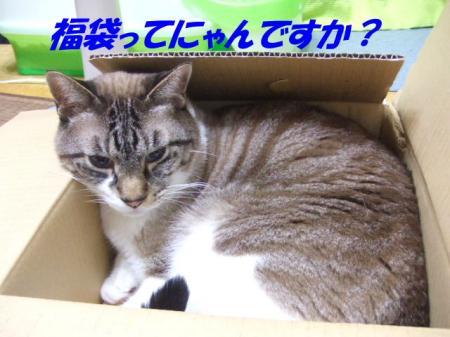 DSCF0831_20100104095416.jpg