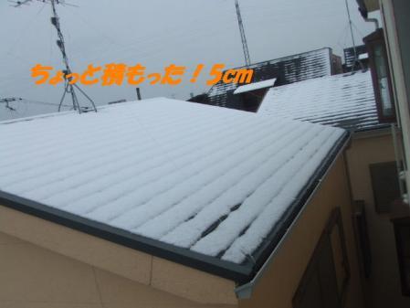 DSCF2199_20110212220422.jpg
