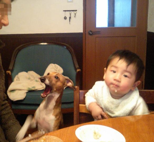 チビと犬11
