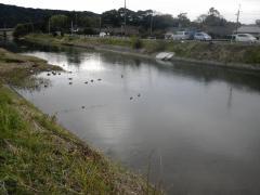 のどかな川
