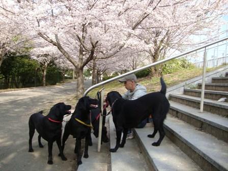 201104花見 (4)