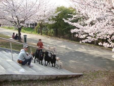 201104花見 (5)