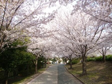201104花見 (3)