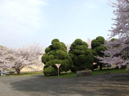 201104花見 (2)