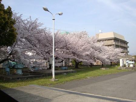 201104花見