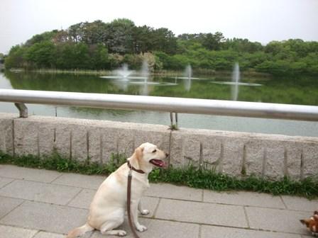 20110503 鶴見緑地 (2)