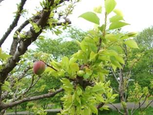 20110503 鶴見緑地 (5)