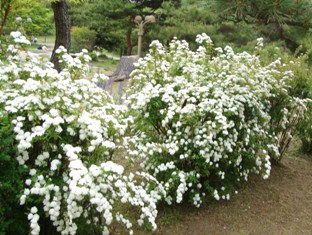 20110503 鶴見緑地 (10)