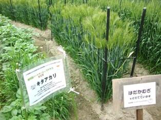 20110503 鶴見緑地 (11)