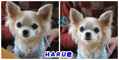 HARU君