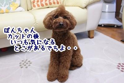 IMG_7048.jpg
