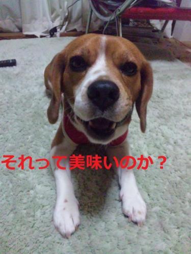 雉ェ蝠柔convert_20110427212909