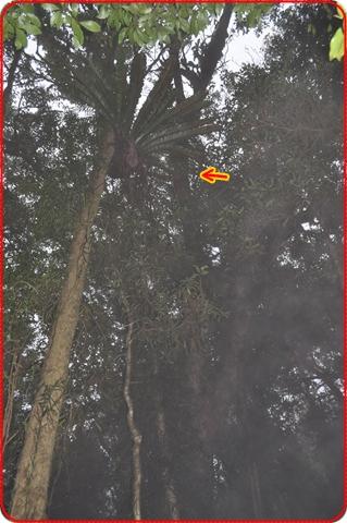 2011425-17.jpg