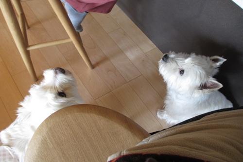 落下物を待つ犬