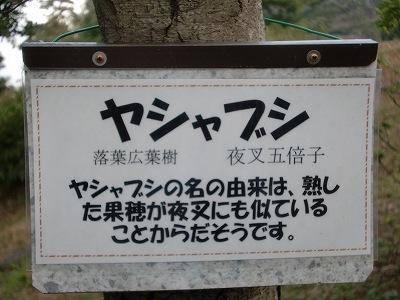 s-ヤシャブシ (4)