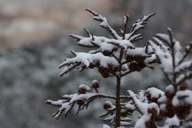 雪の箒沢4