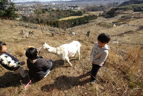 見晴らしの丘で、ヤギと遊ぶ