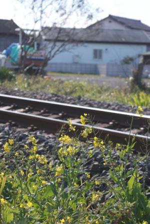 菜の花と線路