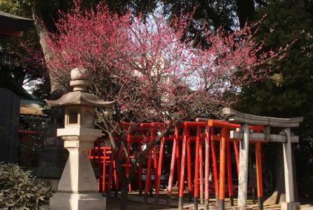 品川神社紅梅