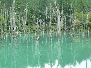 青い池2013の1