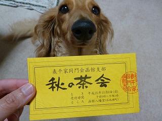 秋の茶会函館八幡宮2013