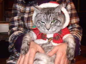 のんたん のクリスマス