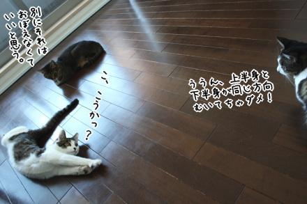猫として、正しい寝相??
