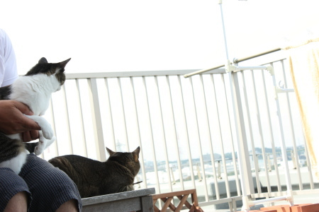 夫、猫、猫