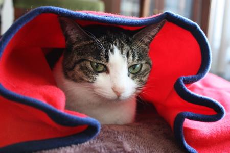 ちっさいよ、この毛布・・・