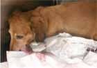 犬の子宮頚の腫瘍1