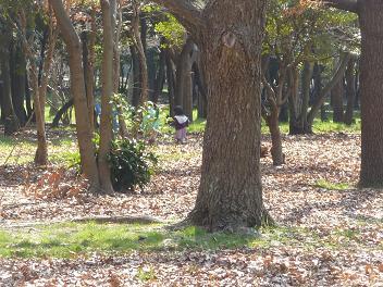 2011 03 13 大泉緑地 tibi03