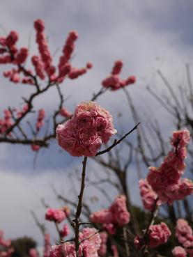 2011 03 27 服部緑地公園 tibi09