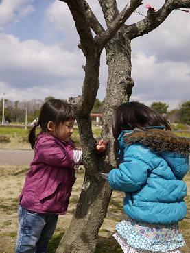 2011 03 27 服部緑地公園 tibi11