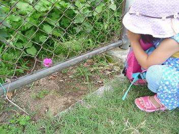 2011 07 25 夕方の公園 tibi03